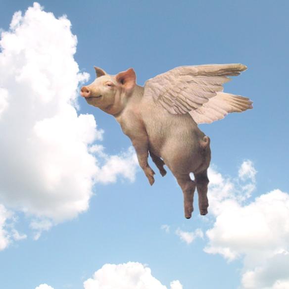 pig - Copy