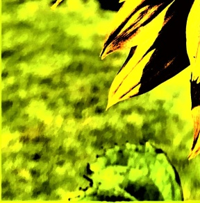 sunflower - Copy_007