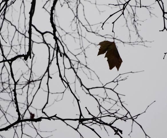 8 last leaf
